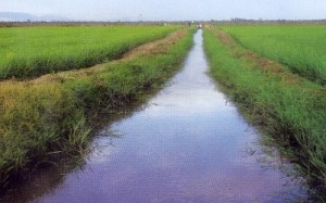 Demand Study for Smallholder Rice Irrigation Schemes in Districts Bordering Lake Victoria
