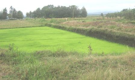 Thua River Irrigation Scheme